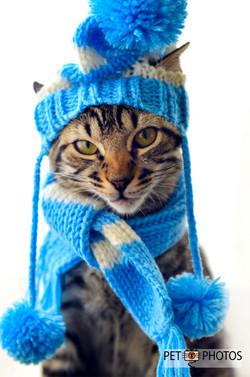 Gato tigrado de gorro e cachecol azu