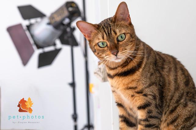 ftografo de gato