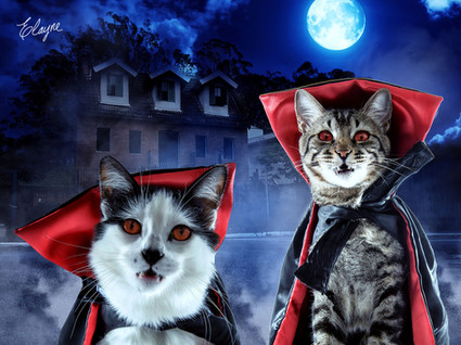 Dracula Cats