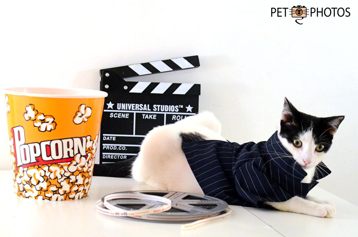 Gato branco e preto de cinema