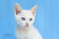 kitten-0915