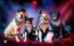 Rock bom pra cachorro