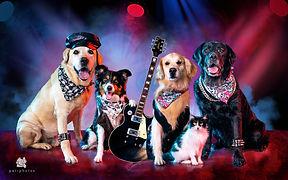rock_cachorro.jpg