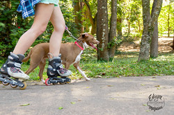 cachorro e patins