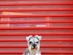 Fotografia Pet Minimalista Project 52 - week 10 - Minimalist