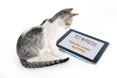 Fotografiade gato em São Paulo
