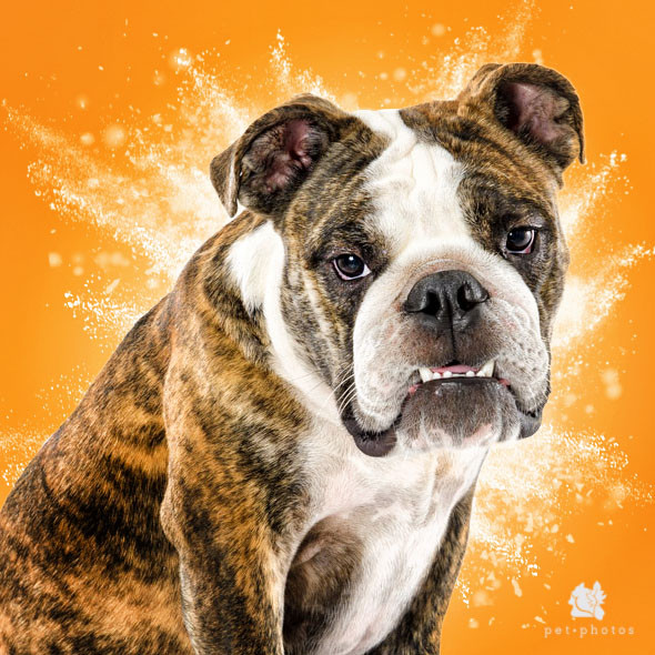 ensaio fotografico de cachorro