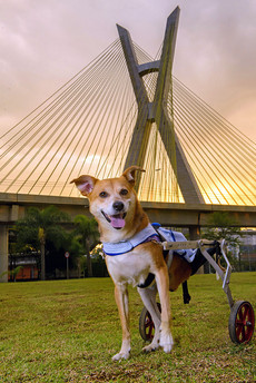 ponte espraiada pet tour