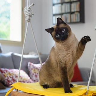 fotografo de gato na residencia