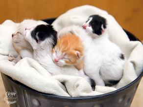 Encontrei 5 gatinhos recém-nascidos. E agora?