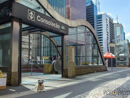 Cachorro fotografado sem guia na Av. Paulista