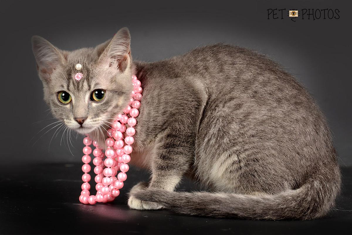 Gato charmosa