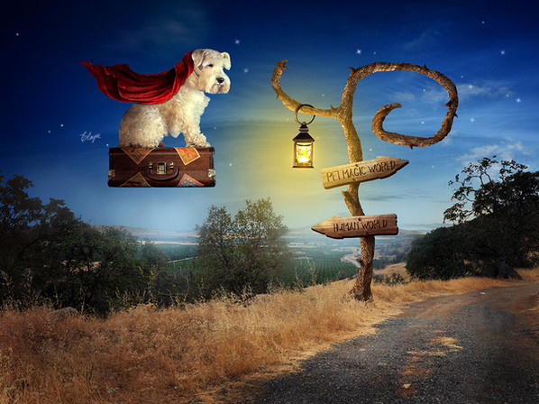 Magic Pet World
