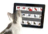 cat_6095.jpg