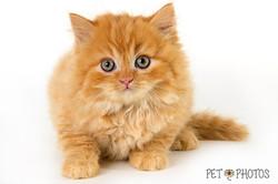 cat-3782