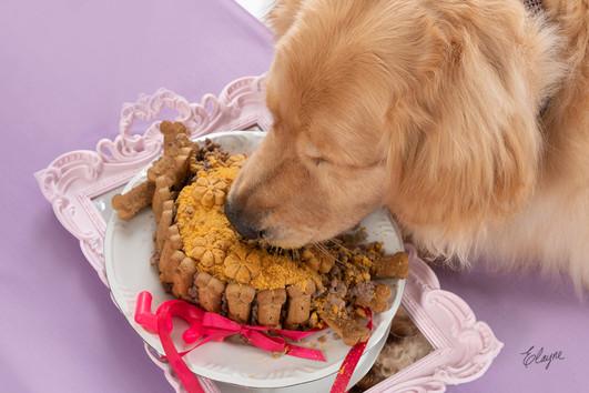 bolo de aniversario para cachorro