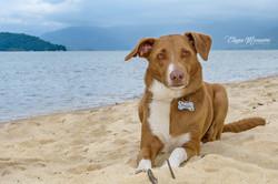 foto de cachorro na praia