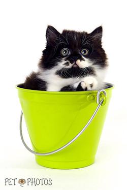 cat-3770