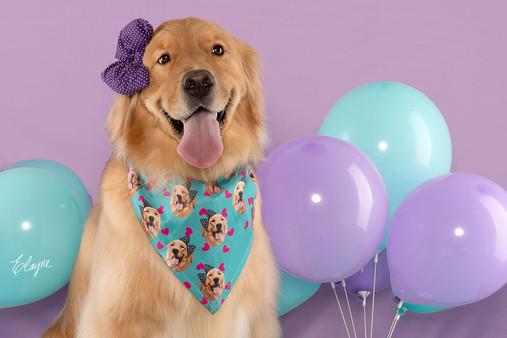 aniversario de cachorro