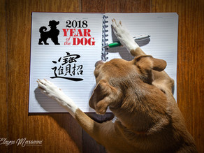 2018 - O Ano do Cachorro Project 52 weeks - Week 7 - The Year of the Dog