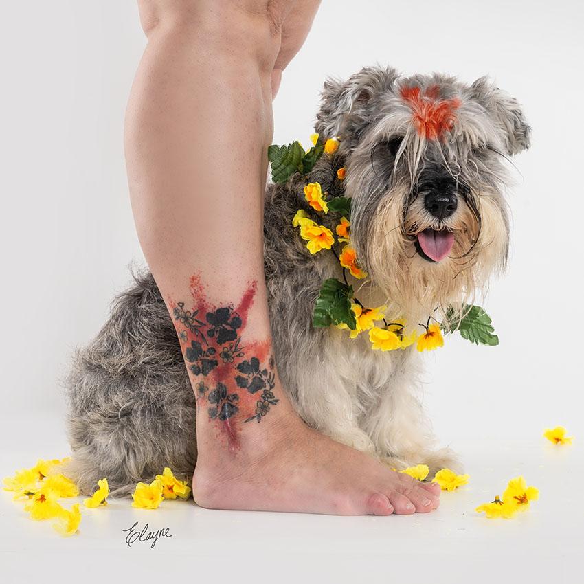 festival nepal dogs schnauzer