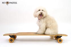 Cachorro e skate