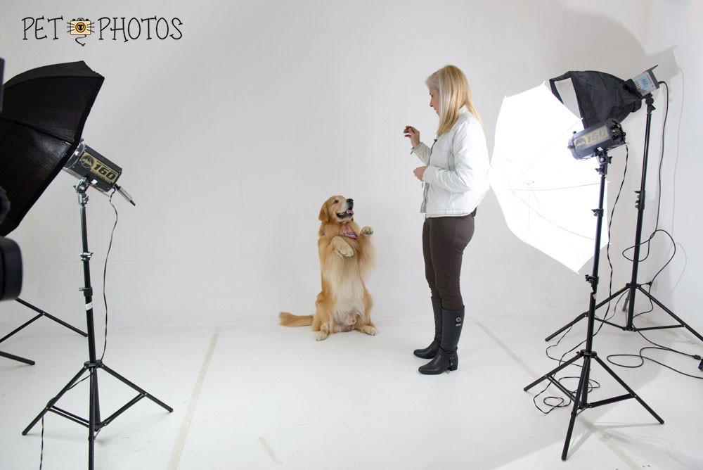 fotografia de cachorro agitado