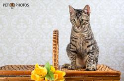 Gato tigrado sobre cesta de pic-nic