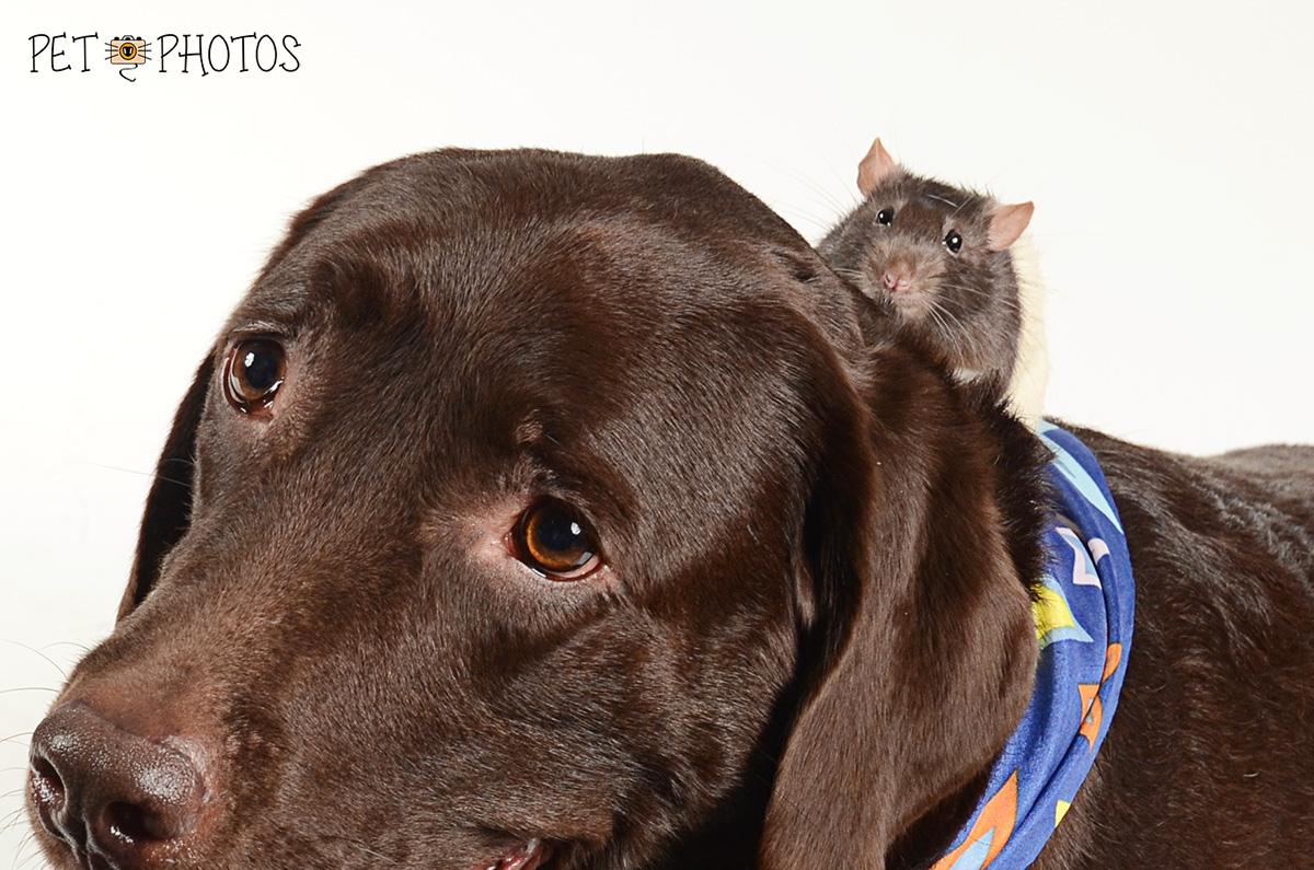 Cachorro e Rato são irmãos