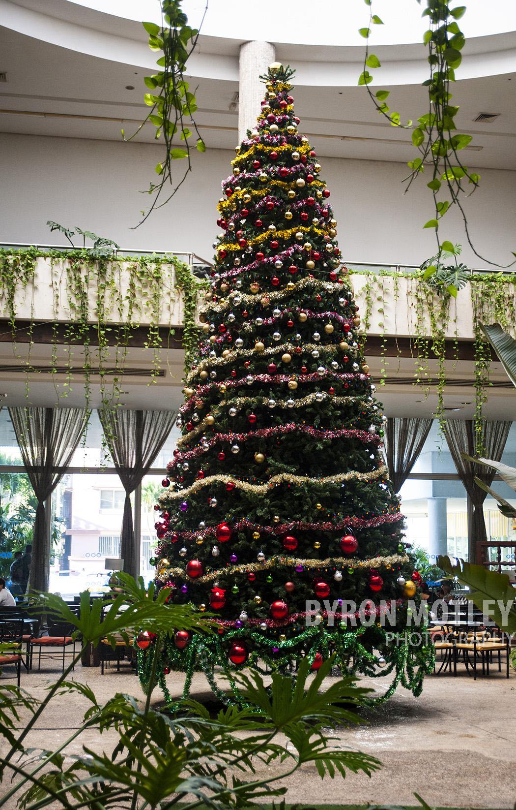 Christmas Tree in Havana
