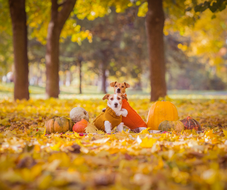 Fall has arrived.