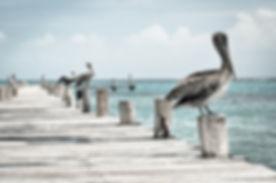Pelicans on a Pier