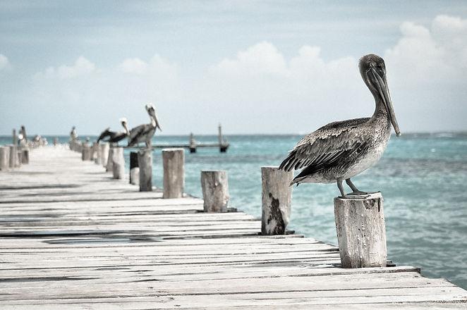 Pelikane auf einem Pier