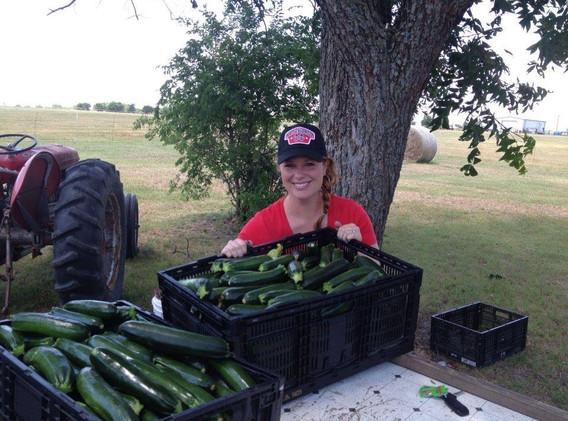 Zucchini harvest queen