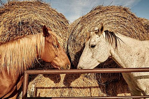 Spade Ranch Horses