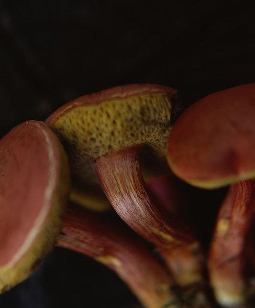 Leather (Mushroom 2)