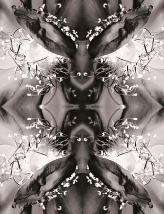 il+moose+to+printshop.jpg