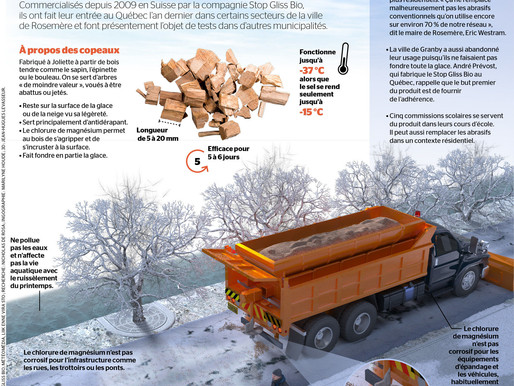 France and Germany Start the Production of Treated Wood Chips