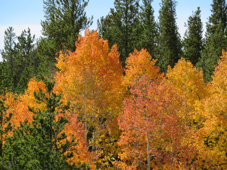 THE RAINBOW TREE: A Fall Writing Frenzy Contest Entry