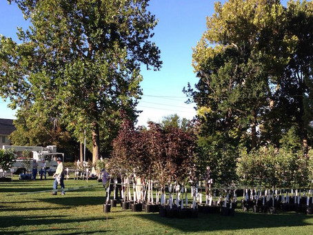 Free Trees for Provo Residents!