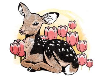WEbsite 2020_ fawn - tulips_.jpg