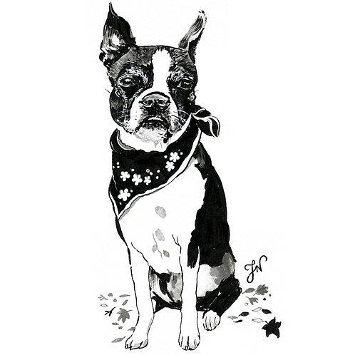 Simple - Pet Portrait
