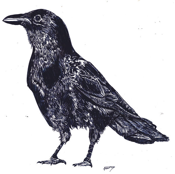 Black Crow - Orginal Drawing 2011_web.jp