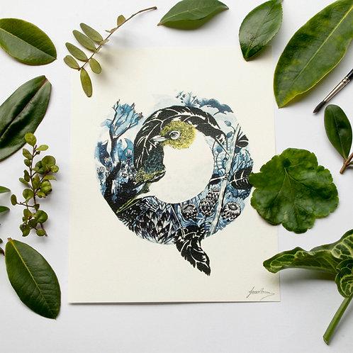 Wax Eye Print- New Zealand Native - Print
