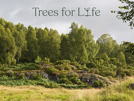 Trees for Life on the hunt for new Trustees