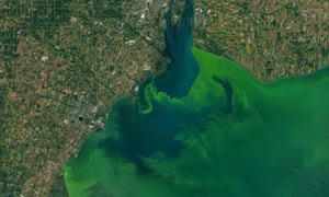 Satellite images capture the algae bloom in Lake Erie in 2017. The algae bloom is caused in part by phosphorous runoff from farms and poses a health risk.