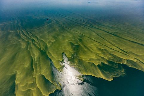 AgriPulse – Toledo seeks to squash state involvement in Lake Erie lawsuit