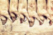 fabien-nissels-ilovetofu-matadouro02.jpg