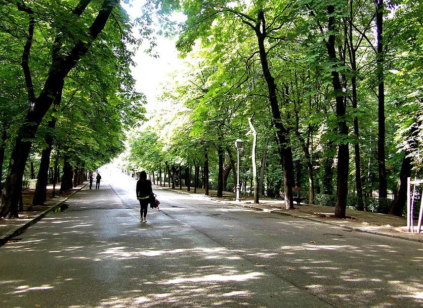 Foto viale sito.JPG