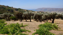 Agios Petros-Gavrio (Andros-Cylades)